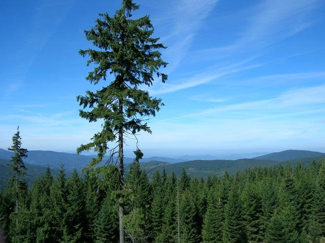 Eindeloze bossen van het Boheemse Woud