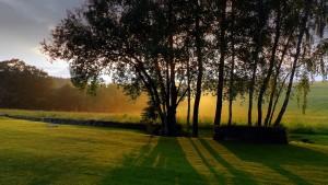 Zonsondergang in het Boheemse Woud