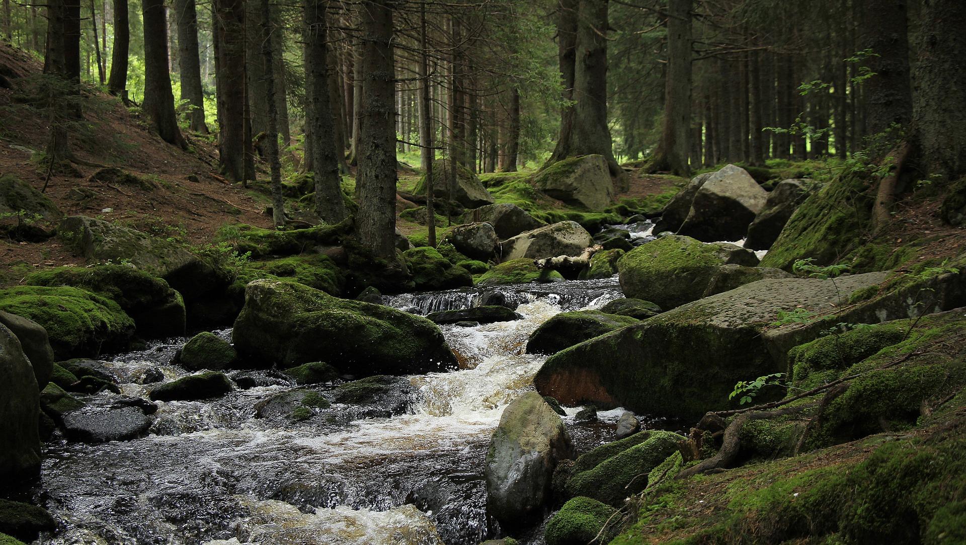 Je maakt een uitstapje naar de bron van de bekendste en langste rivier van Tsjechië: de Vltava (Moldau). Deze rivier is uitgegroeid tot een nationaal symbool van Tsjechië.